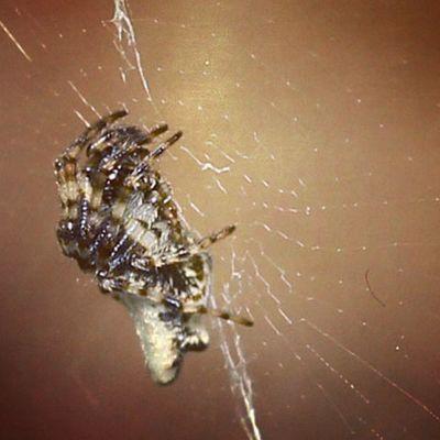 Spider Spiderworld Ig_spiders Ig_spider nature macro closeup