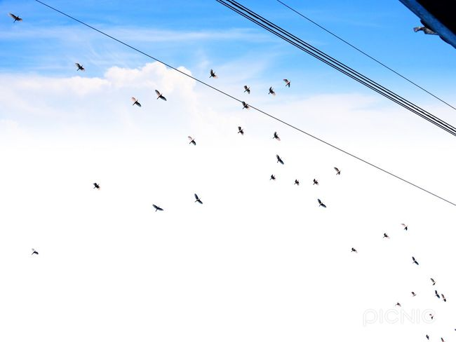 Large Group Of Animals Flock Of Birds Flying Bird Animals In The Wild Animal Themes Animal Wildlife Sky