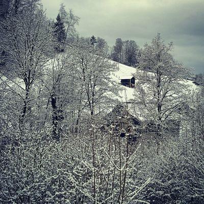 Windowview Snowtree Snow Landscape