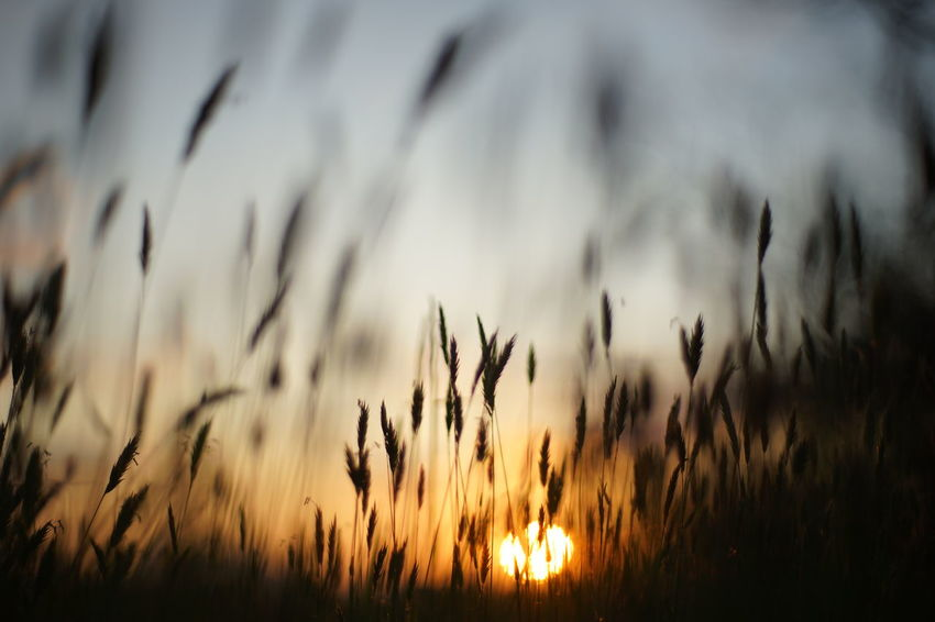 Capture The Moment Depth Of Field Fragility Sunrise_sunsets_aroundworld Silhouette Grass Beauty In Nature Nature Rural Scene Backgrounds Dramatic Sky Tranquil Scene Low Section Macro Fantasy Fine Art Landscapes Darkness And Light Full Frame Detail Oldlens Zeiss SONY A7ii EyeEm Best Shots 17_04 Break The Mold TCPM Art Is Everywhere EyeEmNewHere The Great Outdoors - 2017 EyeEm Awards