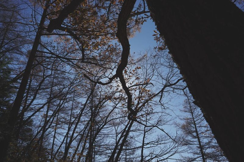 Silhouette Tree Low Angle View Branch Nature No People Sky Beauty In Nature Bare Tree Growth Day Outdoors Upward View Mountain Range Nature_collection EyeEm Best Shots Japan 登山 Silhouette_collection Beautiful Light And Shadow Beauty In Nature 日本 紅葉 Low Angle View