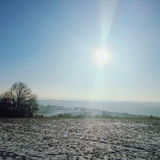 Sky Sunlight Nature Beauty In Nature Outdoors No People Tree Day Snow ❄ Tranquility Horizon Over Land