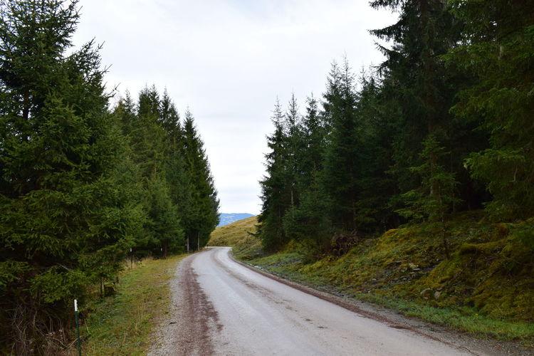 Forest Outdoors Road Tree Saalbach Hinterglemm