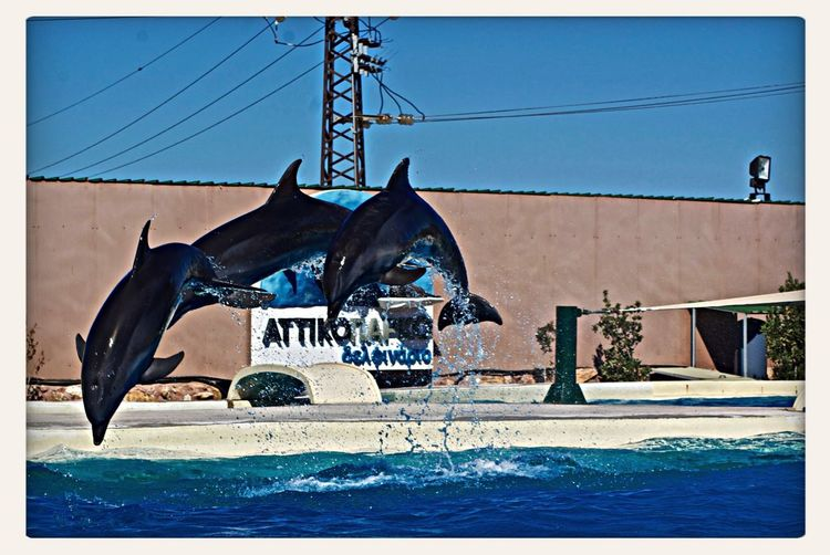 Dolphins Zoo