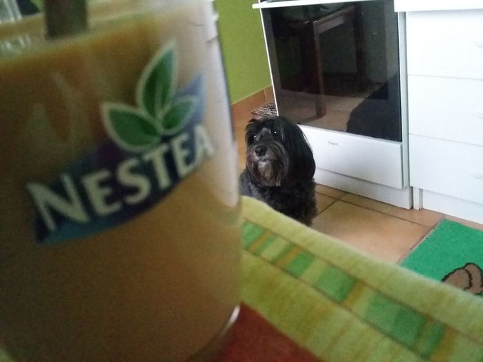 Morgen coffe dog