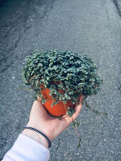 Cropped hand of person holding potted plant against street
