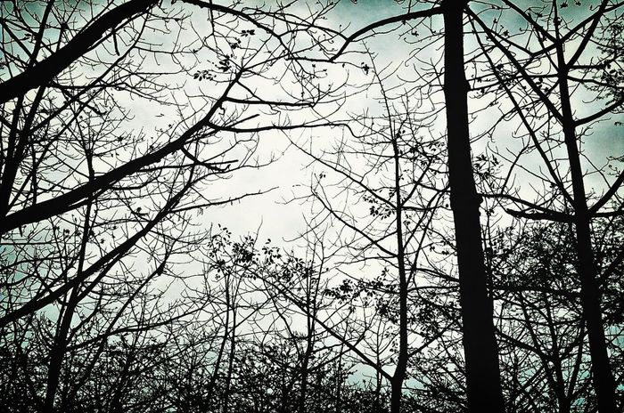 Blackandwhite TreePorn EyeEm Nature Lover EyeEm Best Shots