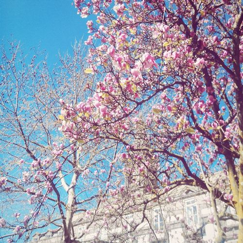 Spring Flowers Magnolia Magnolia Tree Flowers Inlovewithspring💕 Eyeemporto Hello Sunshine
