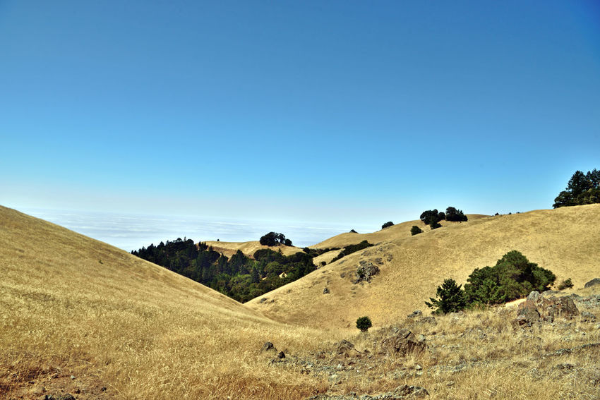 Mount Tamalpais State Park 13 Mount Tamalpais State Park Ele: 2,576 Feet Highest Peak Of The Marin Hills Covers 25,000 Acres 21 Trails More Than 50 Miles Of Hiking/biking Trails Rock Spring Trail Nature Beauty In Nature Landscape_Collection Landscape_photography Marine Layers! Marin Headlands Evergreens Golden Brown Hills Hiking Mt. Tam Hiking Adventures Hiking ❤️ Blue Sky Landscape Geology Rugged The Great Outdoors - 2018 EyeEm Awards