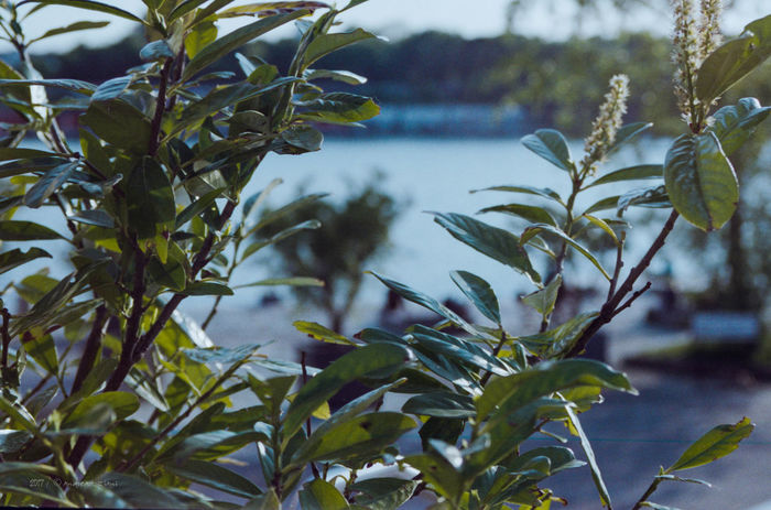 Beauty In Nature Behind The Bushes Branch Close-up Day Focus On Foreground Freshness Growth Leaf Nature No People Outdoors Plant Tree Water