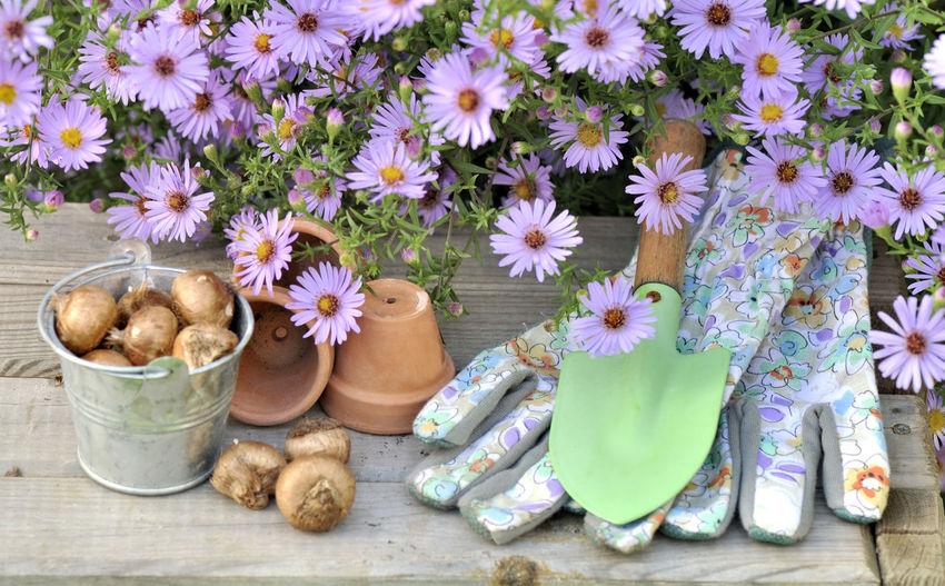 Gardening Bulbs Can Flower Flower Head Flowering Plant Freshness Garden Glove Nature Plant Season  Still Life Table