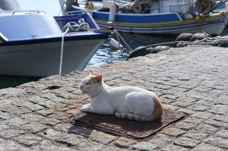 Greece Kos Harbor Animal Themes Animal One Animal Pets Domestic Animals Cat Day Sunlight