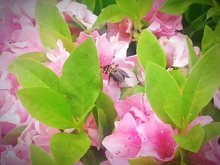 Bees Natrualbeauty Naturelovers Nature_collection Nature Photography Birds&bees Nature EyeEm Nature Lover Beautiful Nature Naure Shot