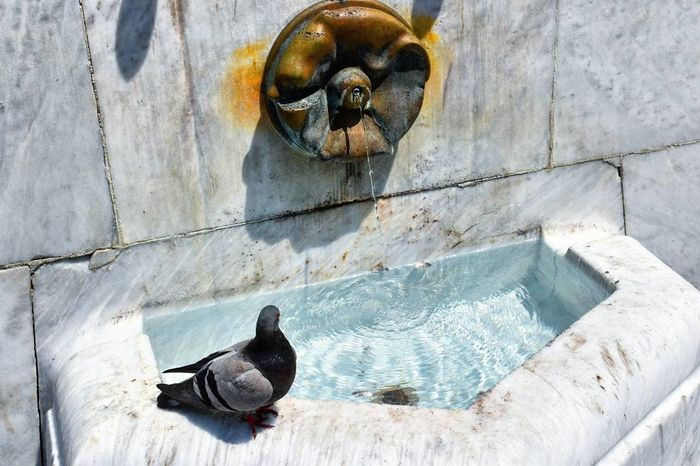 Pigeon Fountain Water City Oldcity Street Center Belgrade
