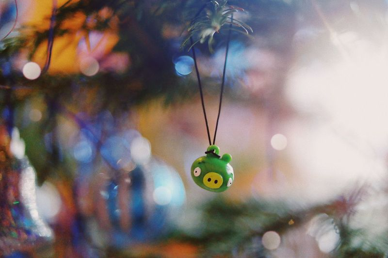 Piggy Christmas 🎄... Party Design Plastic Tradition Blur Winter Wintertime Ornament Decoration Background Toy Pig Piggy Angry Birds Angrybirds Christmas Ornament christmas tree Holiday - Event Hanging Decoration Focus On Foreground No People Close-up Nature Green Color Celebration Lighting Equipment Multi Colored Jewelry Animal Themes