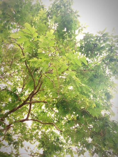 Treez Everywhere.😘 Nature Tree Beauty In Nature Branch Sky