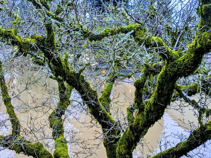 Flood waters through trees. Branches Creepy Water Flood Blue Green Abstract Brown Wet Depth Contrast Dark And Light Contrast Dirty Dramatic Intense Surreal Tree Backgrounds Full Frame Close-up Sky Leaf Vein