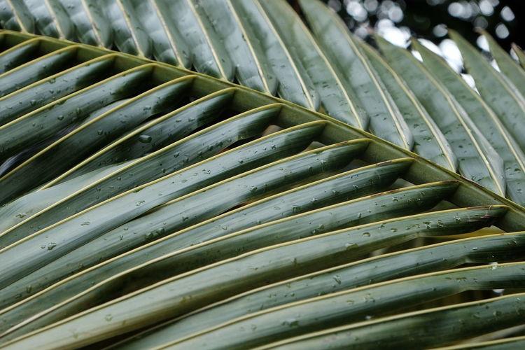 Close-up of wet palm leaf