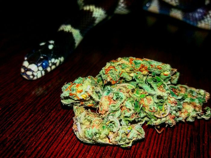 Weed Weed Life Snake California 420life Joint Smoking  Joint Time Blunt