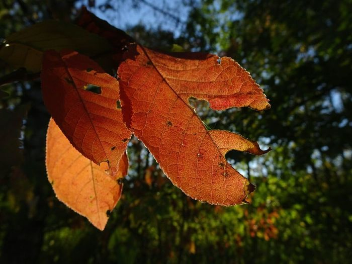 Fall in a forest Poland Nature Light Sony September Sky Silence Of Nature Leaf Plant Part Autumn Plant Nature Orange Color Change Close-up No People Tree Outdoors Day Natural Pattern Beauty In Nature