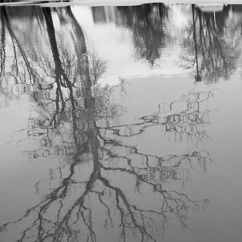 tree reflection Trees Water Backgrounds No People Day Close-up Outdoors Nature