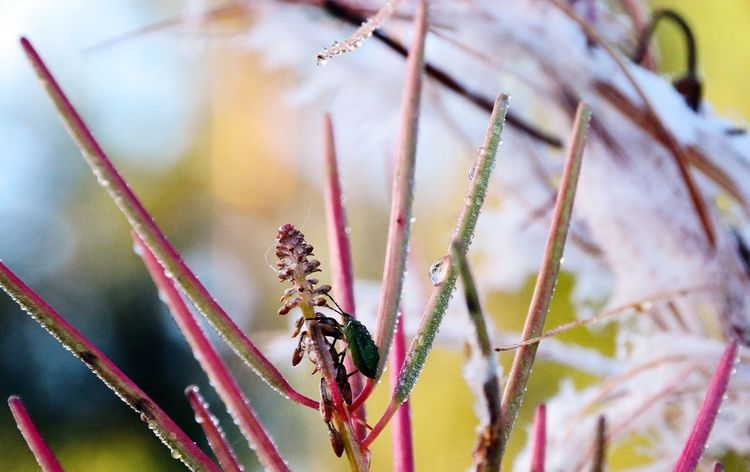 Insect One Animal Animals In The Wild Spider Animal Themes Animal Wildlife Close-up No People Nature
