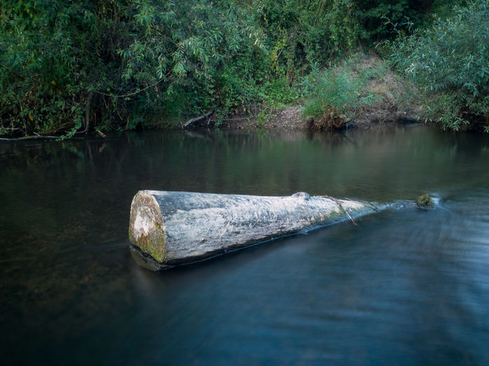 Tree stump in shallow river with fast current against shore overgrown with grass during dusk.