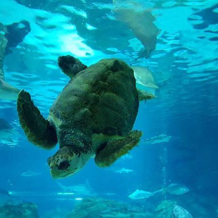 금요일.. 처음 가본 코엑스 아쿠아리움~ 거북이는 먹보였구나~😰 동물들과 있는 시간은 편안하다😌 자유롭게 왔으면 더 좋았겠지만..😒 코엑스 아쿠아리움 Aquarium 거북이 돼지거북이 물속친구들 일상스타그램