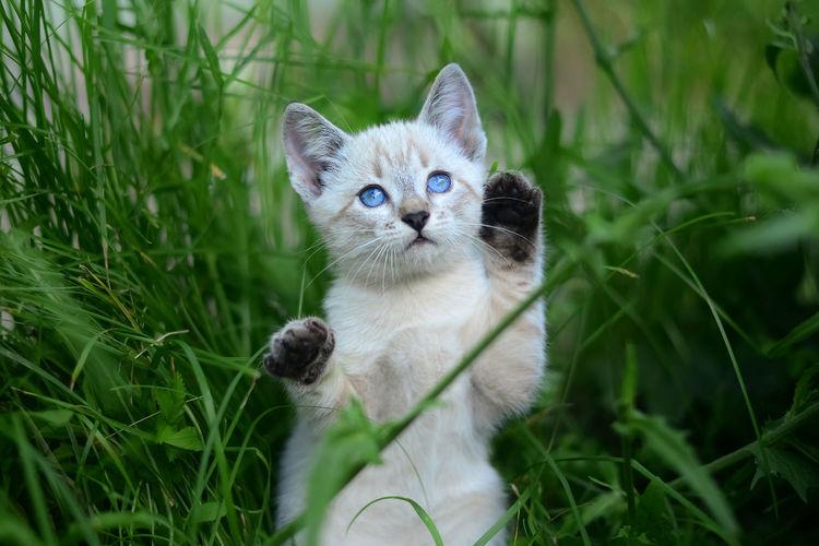 Portrait of kitten on field