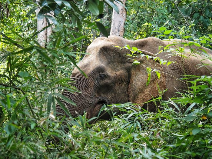 Close-up of elephant on plants