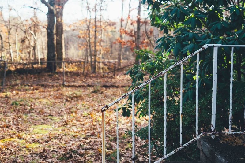 Railing and woods in fall Abandoned Buildings House Sold Fixer Upper New England  Porch Forest Woods Plant Nature Tree Fence Land Boundary Day Barrier Autumn Forest No People Tranquility Outdoors Beauty In Nature Focus On Foreground