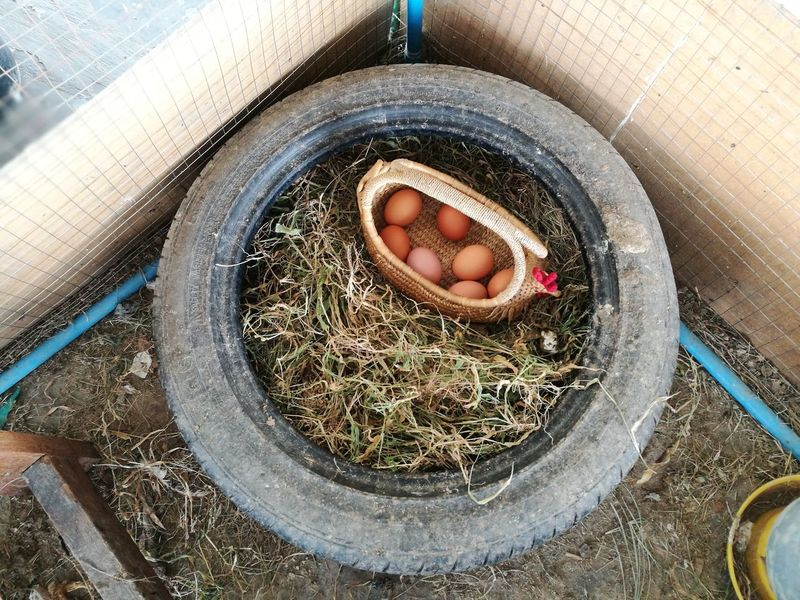 One Person Water Real People Day Indoors  Domestic Room Human Body Part Close-up People Egg Farm Basket Tyre Food Raw Nature Healthy Eating Egg Carton Grass Food And Drink High Angle View