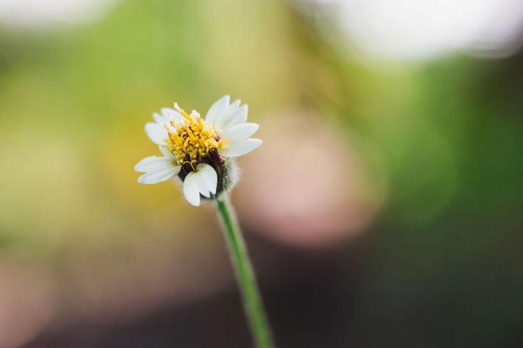 Flower Flowering Plant Freshness Fragility Vulnerability  Plant Beauty In Nature Growth Petal Focus On Foreground White Color Flower Head Inflorescence Close-up Nature Plant Stem Day Selective Focus Pollen Outdoors No People