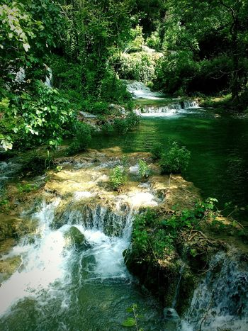 Krka NP. Green Green Green!  Naturelovers Nature Photography