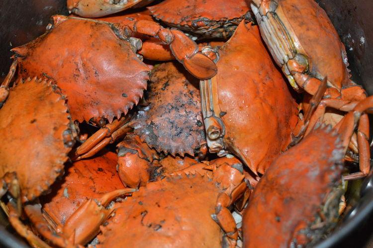 Sea Food crabs Cook Crabs Crab Legs Crab Shell Crabbies Crabs Crabshell Sea Food Sea Food Photography