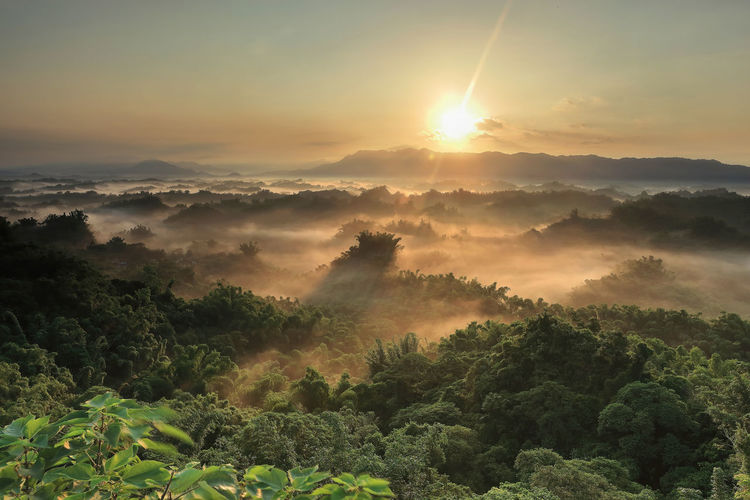 Beauty In Nature Scenics - Nature Tree Tranquil Scene Tranquility Plant Sky Sunset Sun Growth Fog Non-urban Scene Nature No People Cloud - Sky Idyllic Environment Landscape Mountain Outdoors Hazy