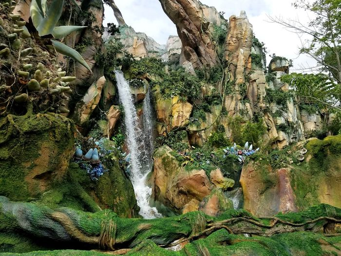 Growth Outdoors Tree Day Nature No People Plant Full Frame Backgrounds Sky Close-up Beauty In Nature Freshness Disney World Animal Kingdom Waterfall Original