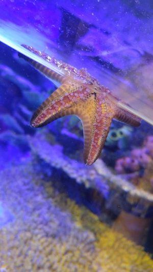 Im A Starfish