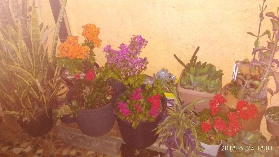 Flower Multi