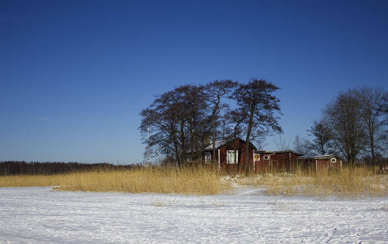 Cottage by the frozen sea EyeEm Nature Lover EyeEmNewHere Architecture Beauty In Nature Blue Built Structure Clear Sky Day Field Grass House Landscape Nature No People Outdoors Rural Scene Scenics Sky Tranquil Scene Tranquility Tree Winter