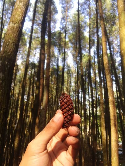 Human Hand Tree