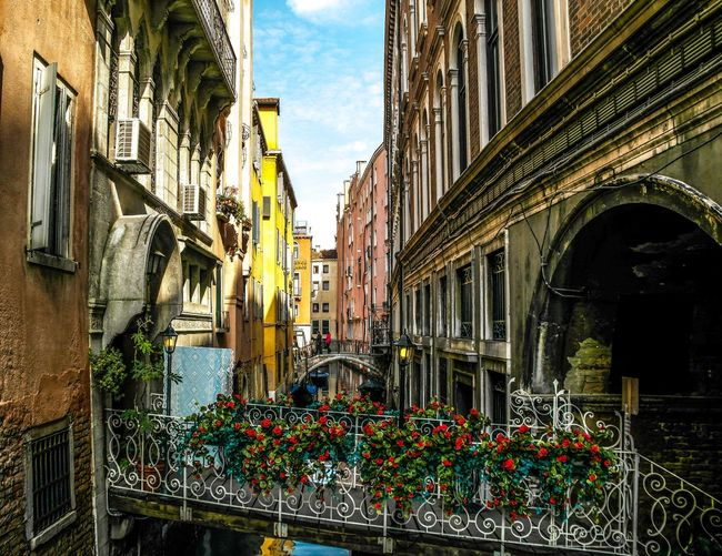 Venice - March 2015 Canal Bridge Roses Architecture Building Exterior Built Structure Window Day Outdoors Plant Balcony Flower No People Window Box Sky City Nature