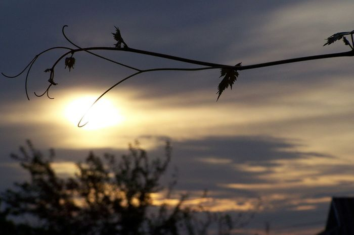 Sunset Village Village Life Nature Odessa Eye4photography  Ukraine Landscapes Skies Sky