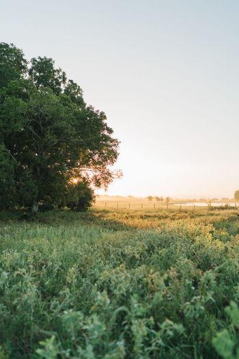 Rural Scene Summer Field Sky