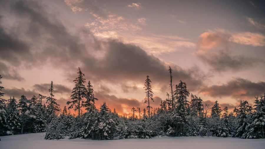 Sunset was lit 🔥 Sunset Igniting Landscape Forest Tree No People OutdoorsEast Coast Multi Colored Beauty In Nature Nature Sky St. John's, NL Snow Winter Cold Temperature Nature Photography NLWX Newfoundland