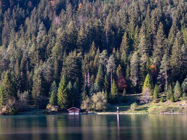Tree Water Plant Forest No People Scenics - Nature Lake Nature Beauty In Nature Land Waterfront Mountain Tranquility Day Reflection Tranquil Scene Architecture Pine Tree Non-urban Scene WoodLand Coniferous Tree Outdoors Pine Woodland
