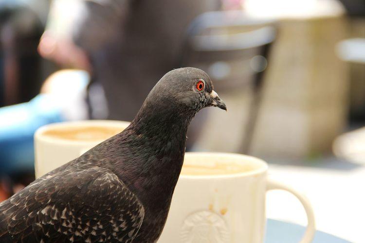 Coffee Coffee With A Dove Dove Hamburg Starbucks Taube
