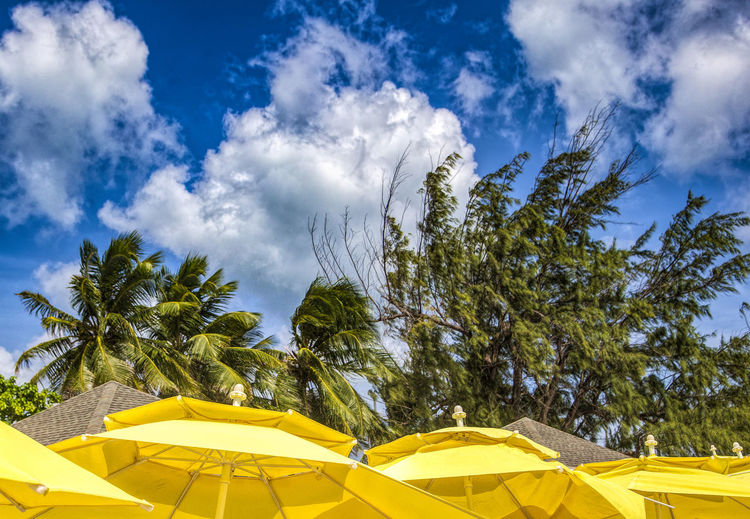 Beach cover Caribbean Life Beach Umbrellas Beauty In Nature Cayman Islands Cloud - Sky No People Outdoors Palm Tree Parasol Plant Protection Sky Tranquil Scene Tranquility Tree Tropical Climate Umbrella Yellow