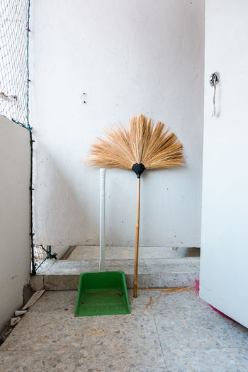 Coconut palm tree on floor against wall in building