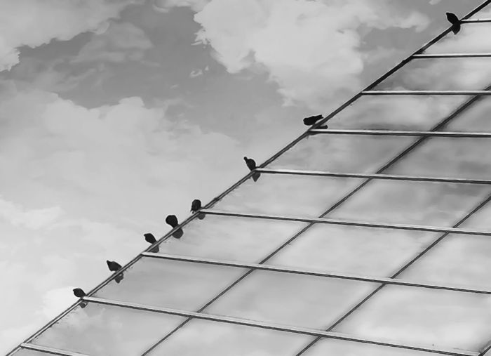 Low angle view of birds perching on power lines against sky